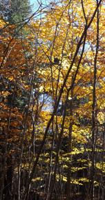 Boyce Woods Nature Preserve